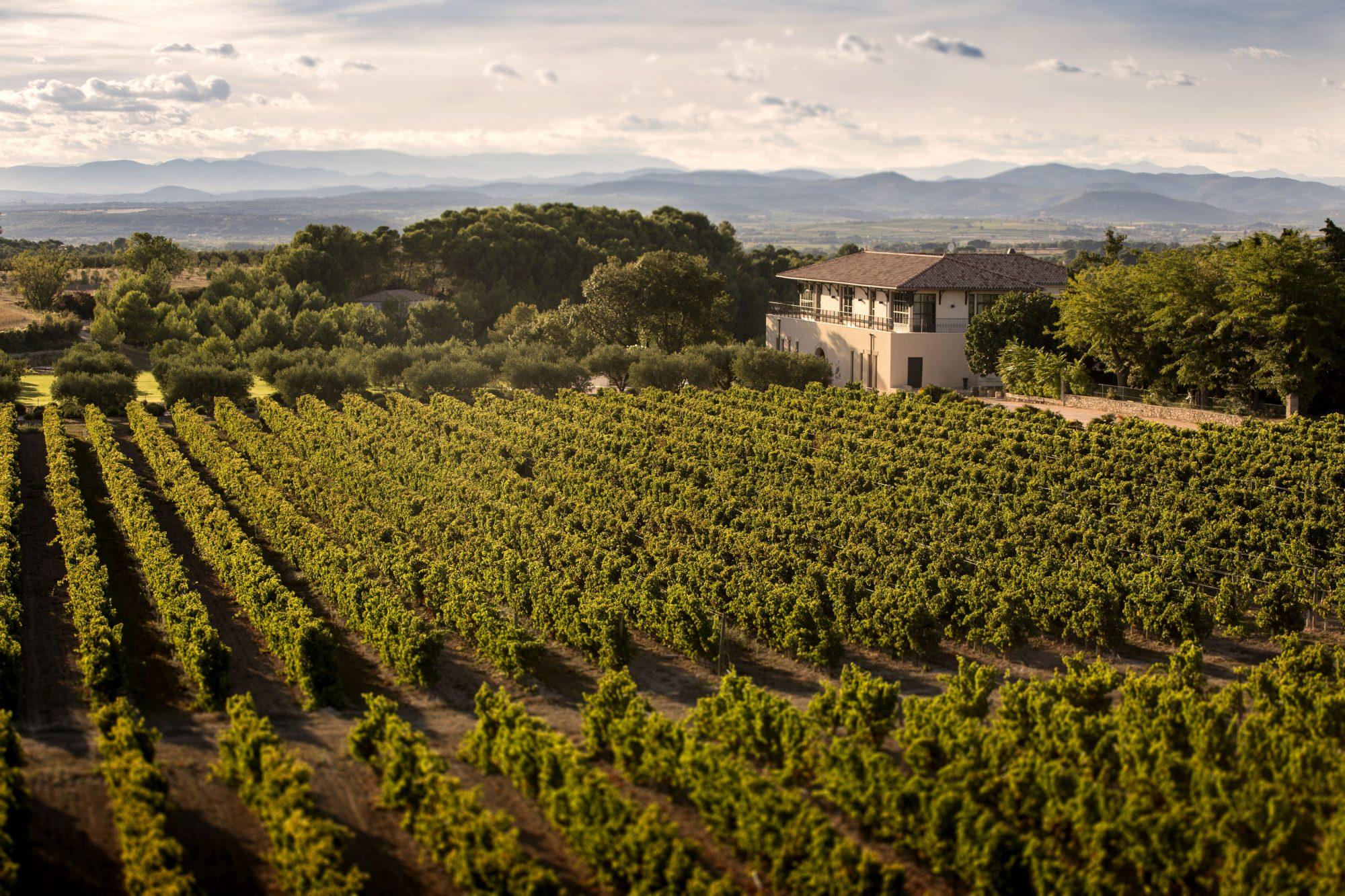 De wijnmakelaar